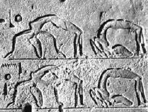 Acrobatic dancers, Karnak;  (Excerpt from a photo by M.Audrain)